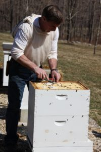 You may recall last March when Guy added fondant bee candy, providing extra nourishment for the bees.  Not all was consumed because the bees are finding nectar outside the hive, so he is removing the excess fondant.