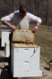 Now that the frames are exposed, Guy uses his hive tool to pry and loosen a frame for lifting out.