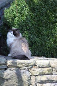 Verdi is enjoying the warmth of the sun.