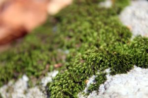 A thick tapestry of moss