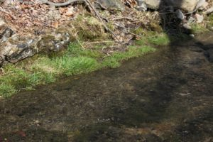 The grass alongside this stream is quite verdant.