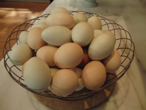 Of course, my freshly laid eggs from the chickens.