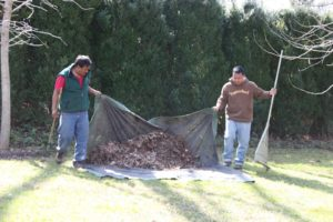 More raking and clearing