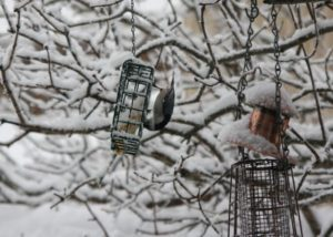 During the long winter, we set out high-energy suet cakes for our little bird friends.