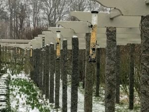 During the cold season, I put up bird feeders on the decorative wooden rafter tails of the clematis pergola for all our avian friends who love to perch on the beams overhead, but they are removed once spring arrives and nature's food is more abundant. I wonder if the birds are confused by the weather.