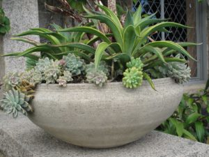 An early Eric Soderholz planter filled with succulents, aloe, and cordyline - One of a pair, this large bowl sits on a wall of my terrace at Skylands.