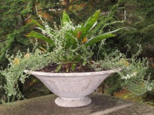 Another shallow cement planter filled with well-grown plants
