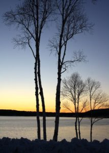 The sun setting on birch trees and the sound