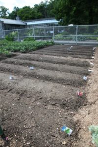 These beds are ready for planting.