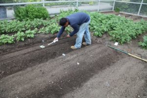 Wilmer is using a Vibro hand seeder from Johnny's.  http://www.johnnyseeds.com/c-460-seeders.aspx