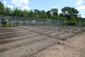 These beds have not been planted yet.