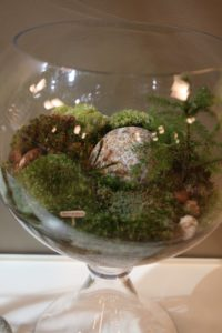 This is a terrarium designed to look like the flora of Skylands, my home in Maine.