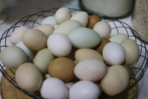 A wire basket of fresh eggs from my chickens