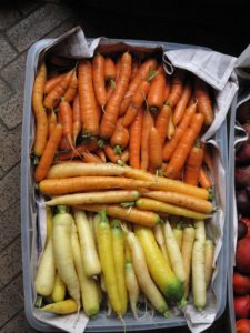 Rainbow carrots - a colorful array of yellow white, and orange