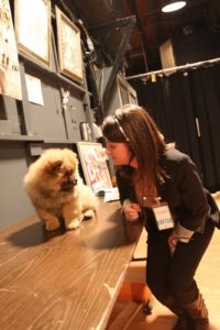 My Chow Chow, G.K. - discovering backstage and making so many new friends