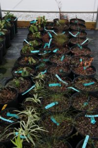 All of the plants are grown in containers or in the fields and all are healthy, clearly marked, and ready to buy.
