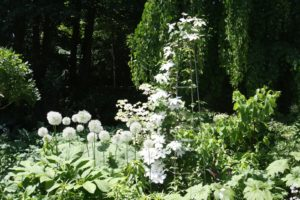 The white garden is next to the driveway.