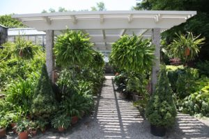 This is the shade pergola outside the greenhouse.  The tropicals are very happy here.