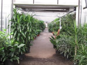 As you can see, Angel Plants is quite vast and has a well-stocked inventory.