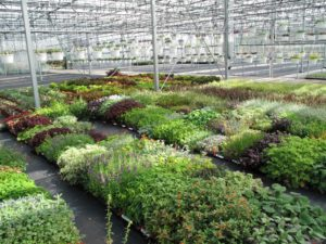 The greenhouses at Beds & Borders are with exceptional plants.