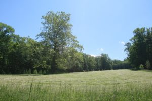 This meadow was freshly mowed.  The hay is drying, waiting to be baled.