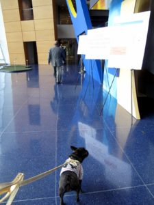 Upon entering the building the Frenchies were dazzled by the sapphire-blue flooring.