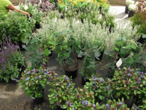 This great assortment of perennials is an order that will be neatly packed onto a truck and transported.