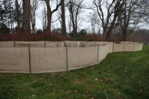 The tree peony garden is surrounded with a burlap windscreen.