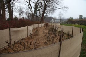 The ground is covered with a thick layer of mulch to protect the soil from heaving.