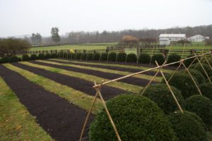 This is the bamboo framework over the boxwoods surrounding the peony bed.