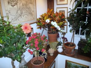The entrance into the party was decorated nicely with some of Phillis's  potted plants.