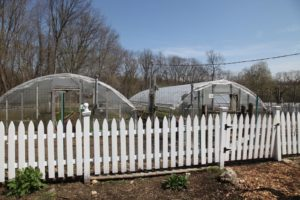 Beautiful produce is grown in these two hoop houses.