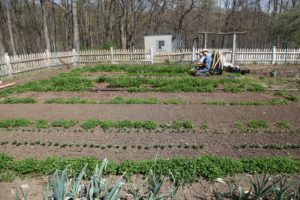 The garden beyond the hoop houses - The head gardener at Rainbeau Ridge is Isaac Jahns.