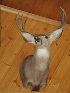 As you can imagine, there is taxidermy everywhere in the lodge.