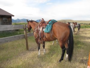 Our horses were lined up and ready for the ride.  We used Quarter Horses from Ted's ranch.