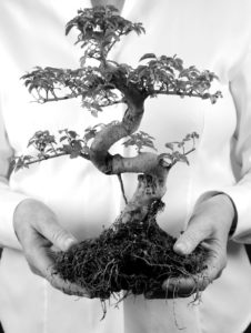 The art of bonsai is all about longevity and I decided to make it the symbol of the Center for Living.