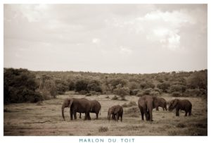A herd of elephants of various ages