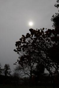 Again - the sun