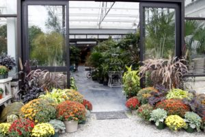 A bright autumnal display leading into the greenhouse