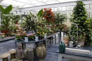 A wonderful collection of annuals, perennials, and tropicals