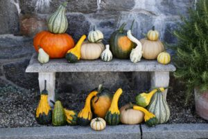 This is a colorful display of our very first pumpkin and gourd harvest.  There are still many more to be picked.