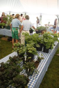 There were many kinds of herb plants for sale.