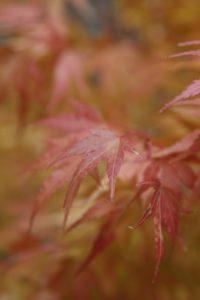 Very pretty leaves