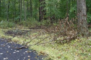 After several windy storms, the woods were full of broken tree branches.