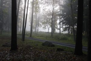 The woods are very peaceful in the early morning fog.