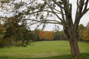 As you can see, there are far fewer leaves on the trees this year.