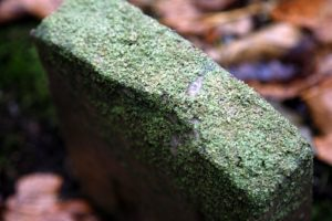A lichen encrusted tombstone