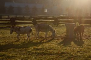 As we drove down to the stable, we said 'good morning' to Billy, Clive, and Rufus.