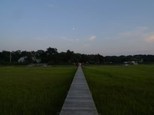 Each of the properties on this stretch of beach have a long wooden boardwalks, which were built long ago, across the marshes and out to sandy beaches on the Peconic Bay.