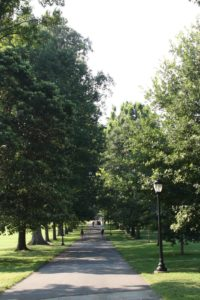 Swarthmore College's famous White Oak allee, which leads up the main path from the train station to the college.